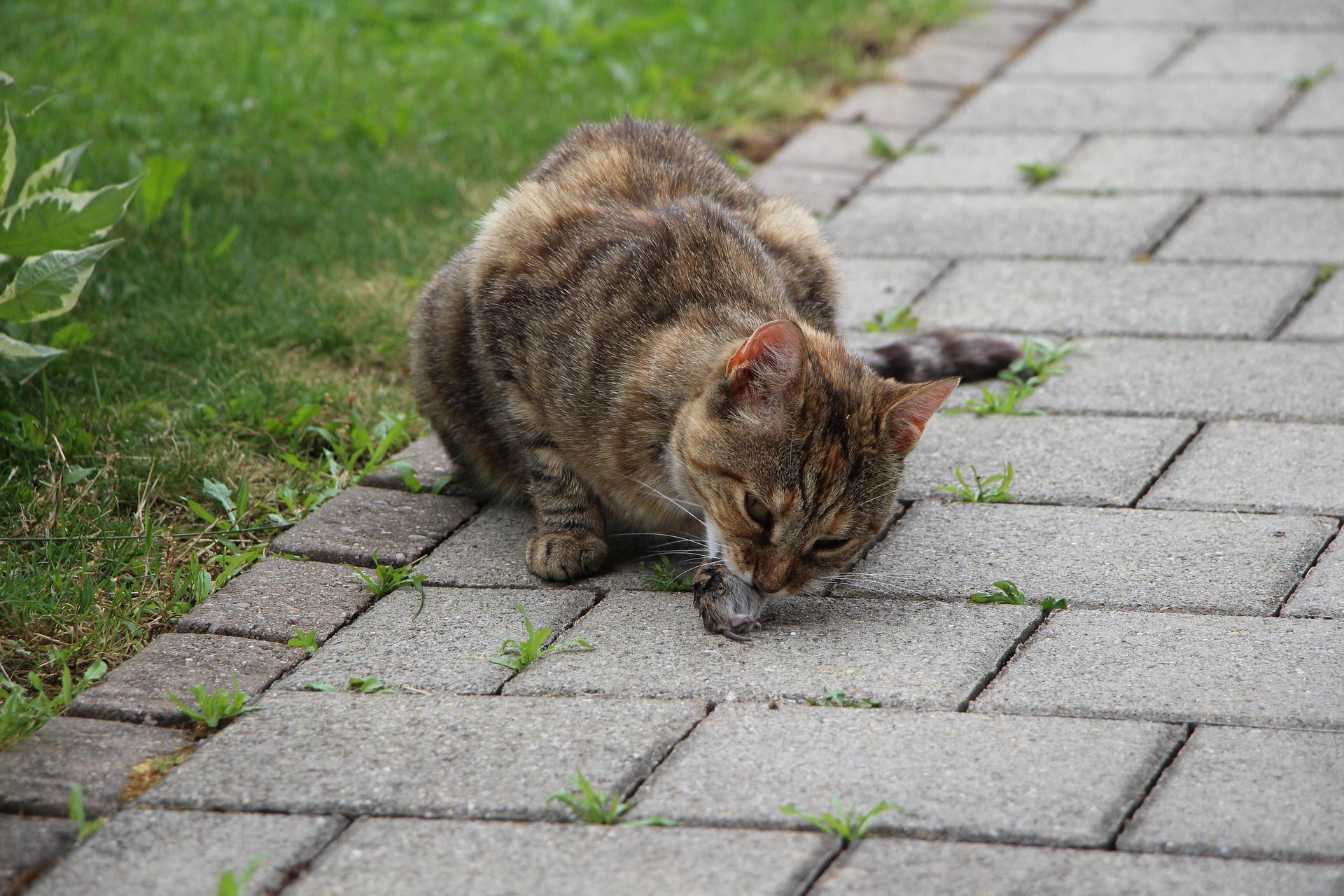Do cats eat mice