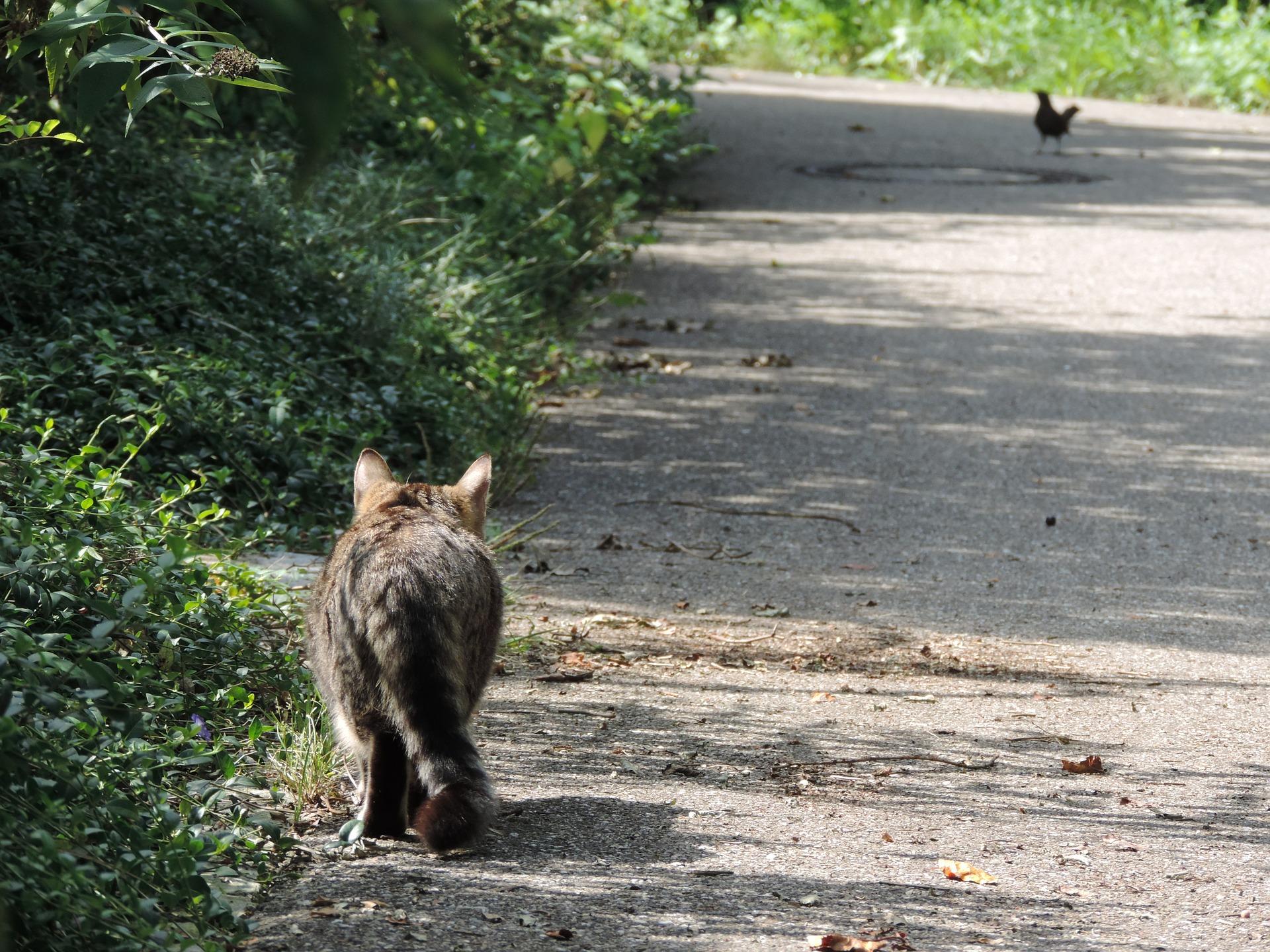Cat Stalk