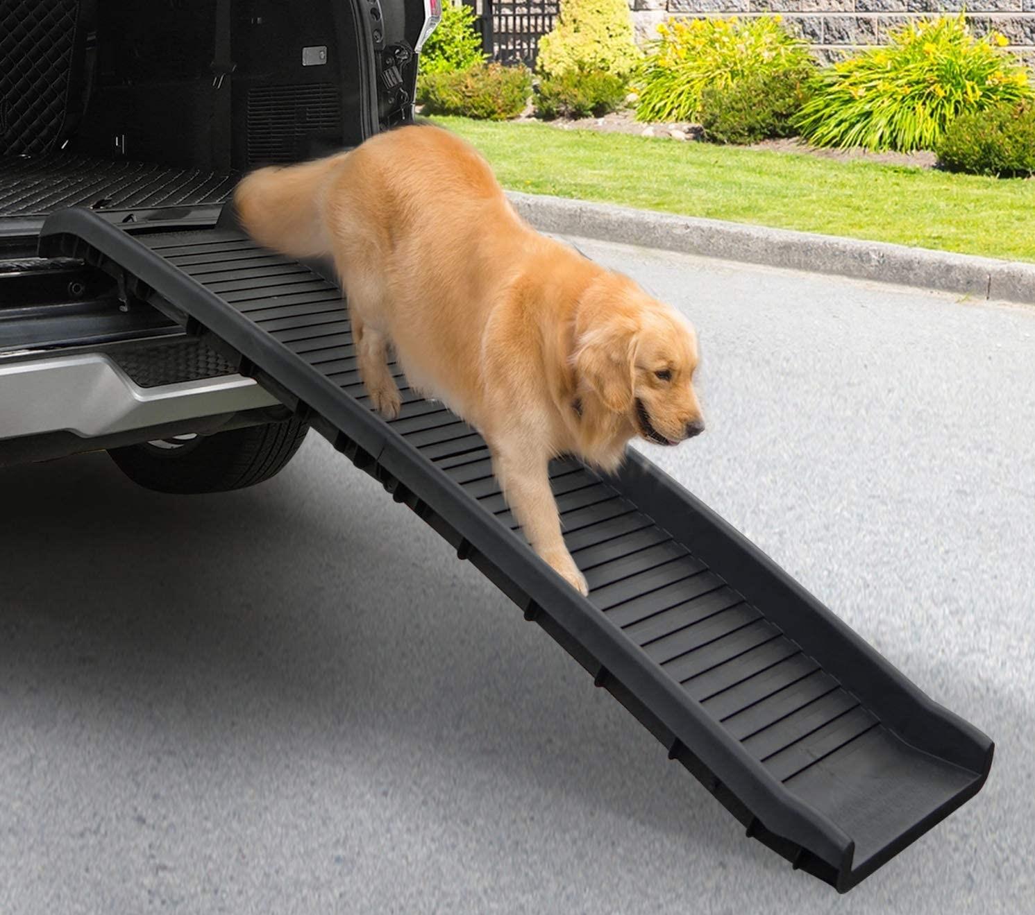 Best Dog Car Ramps