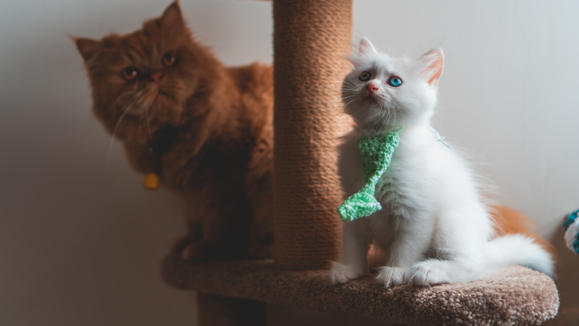 Best Cat Trees for Small Apartment 2021