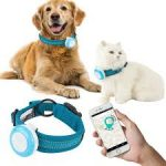 Best GPS Dog Collars