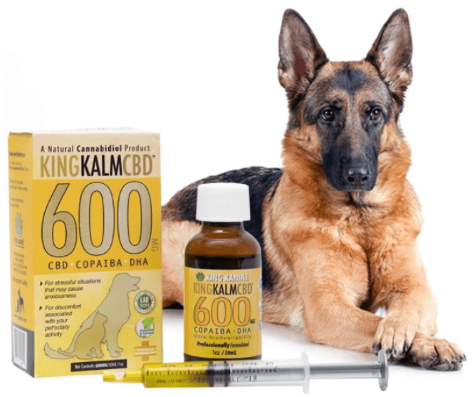 Best CBD Oil for Dogs and Cats