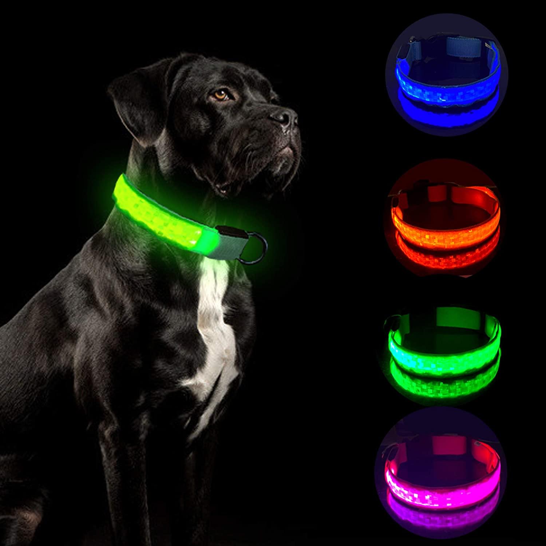 Best Dog LED Collars