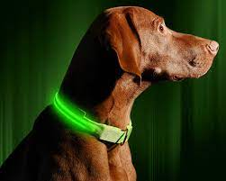 Best Dog LED Collars