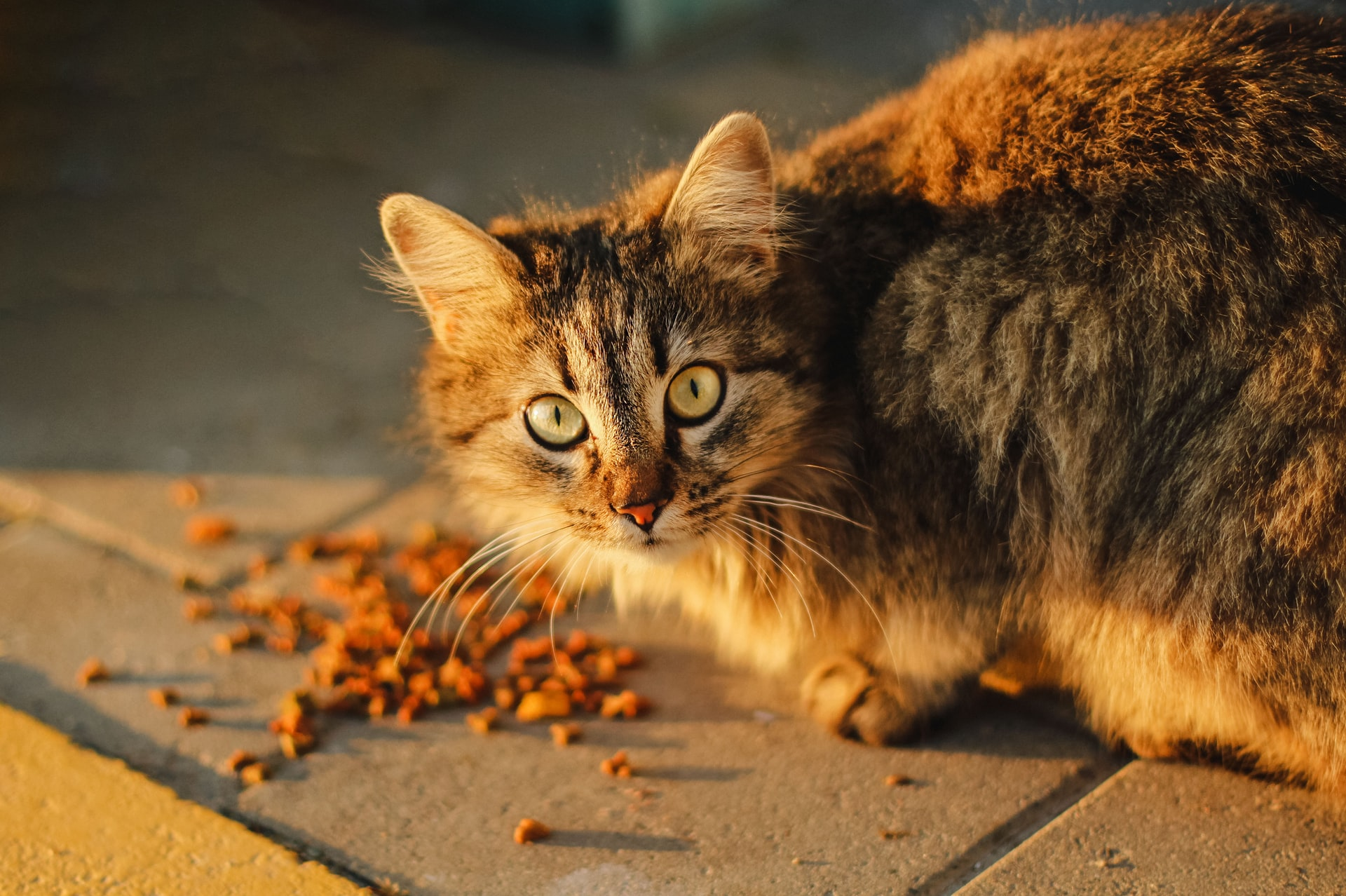Cat Foods for Sensitive Stomach