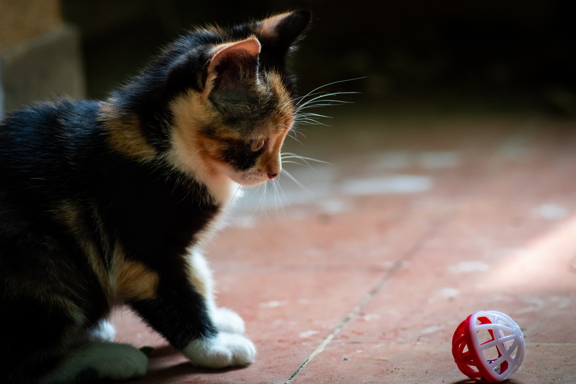 games to play with your indoor cat