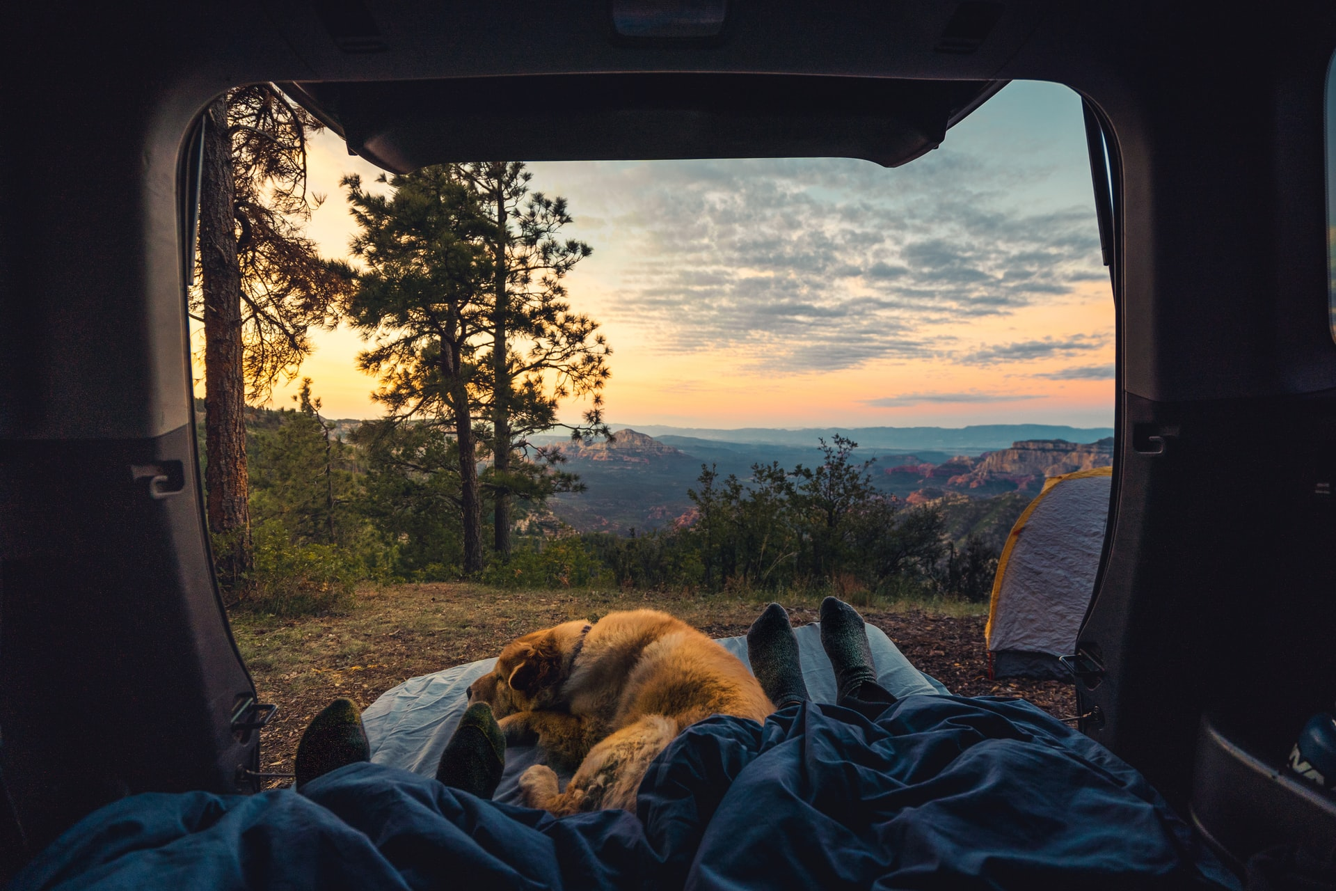 Dog Accessories for RV Camping