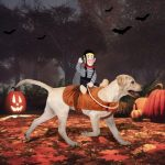 Best Halloween Costumes for Large Dogs