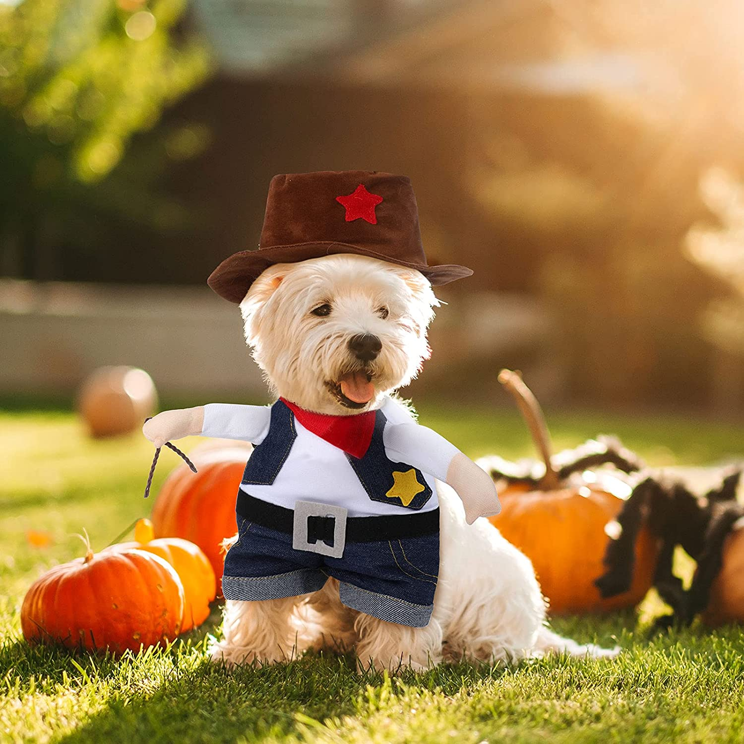 Best Halloween Costumes for Small Dogs