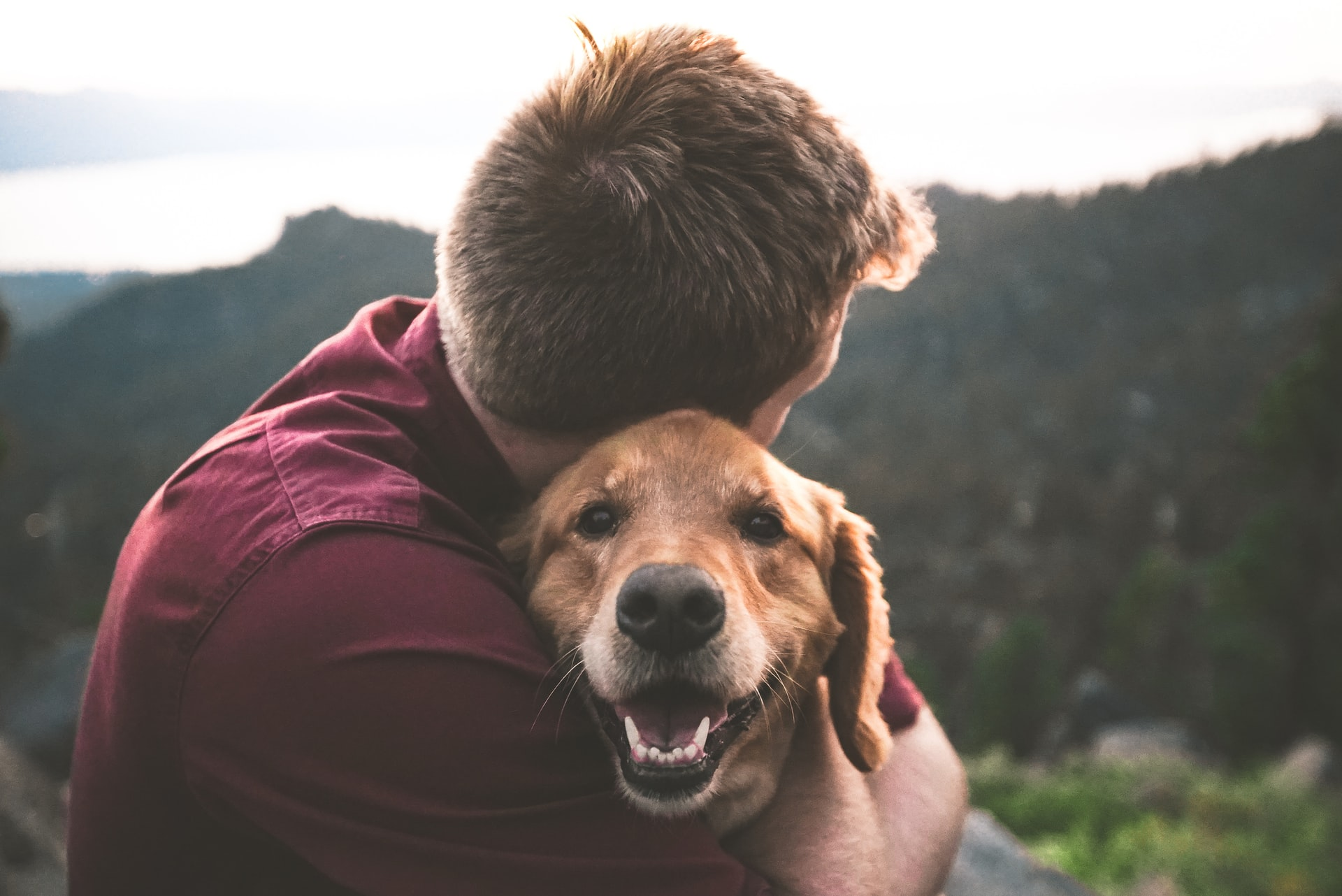 Best Dry Food for Your Dog's Urinary Care