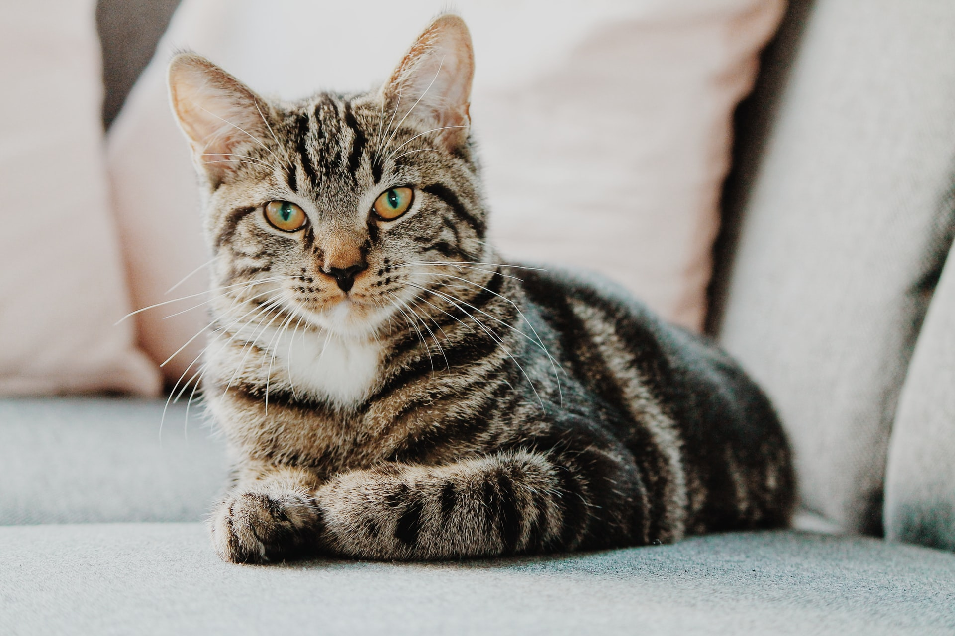 Best Dry Cat Food for Senior Cats