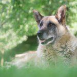 Best Dry Dog Food for Senior Dogs