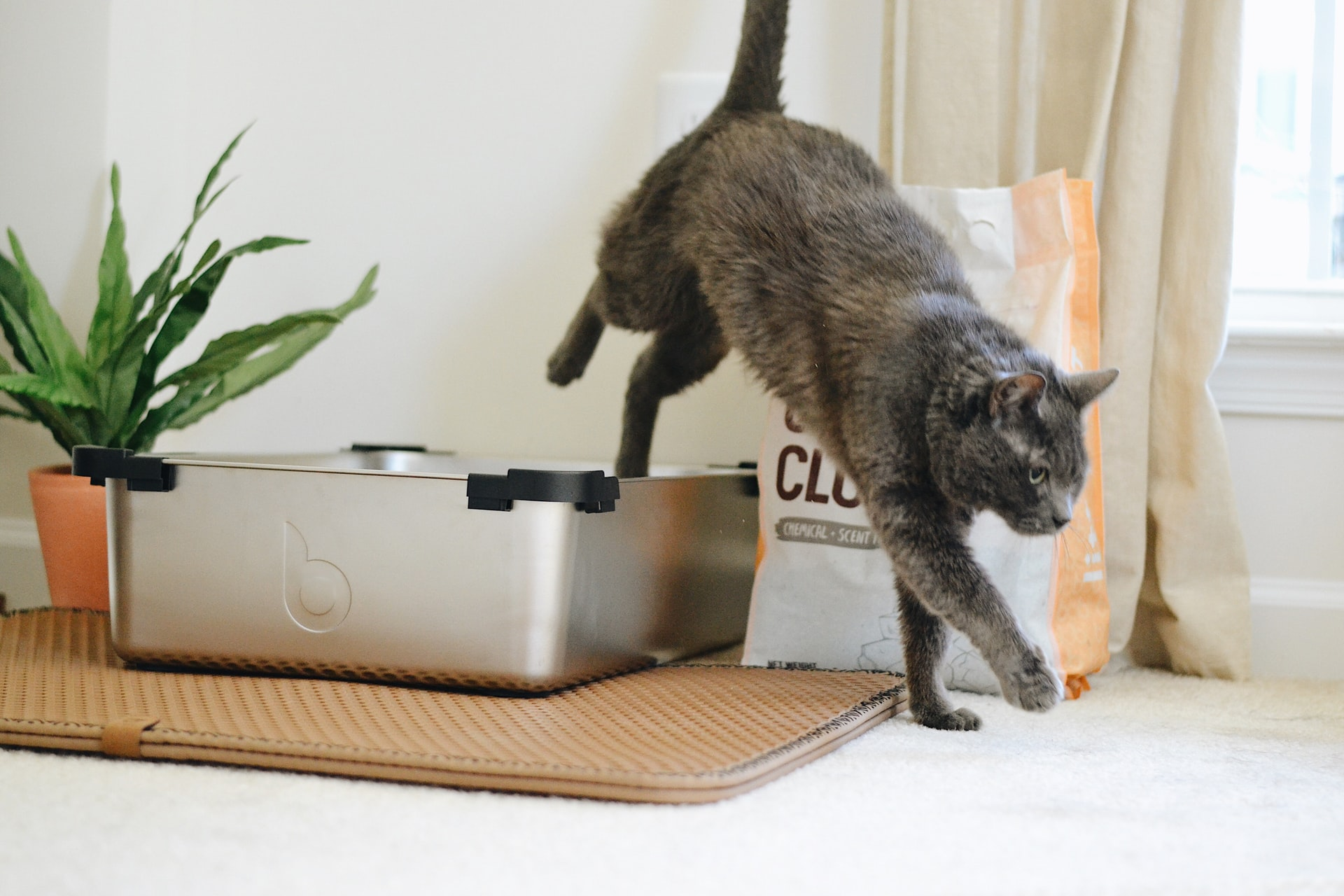 Best Natural and Biodegradable Cat Litters