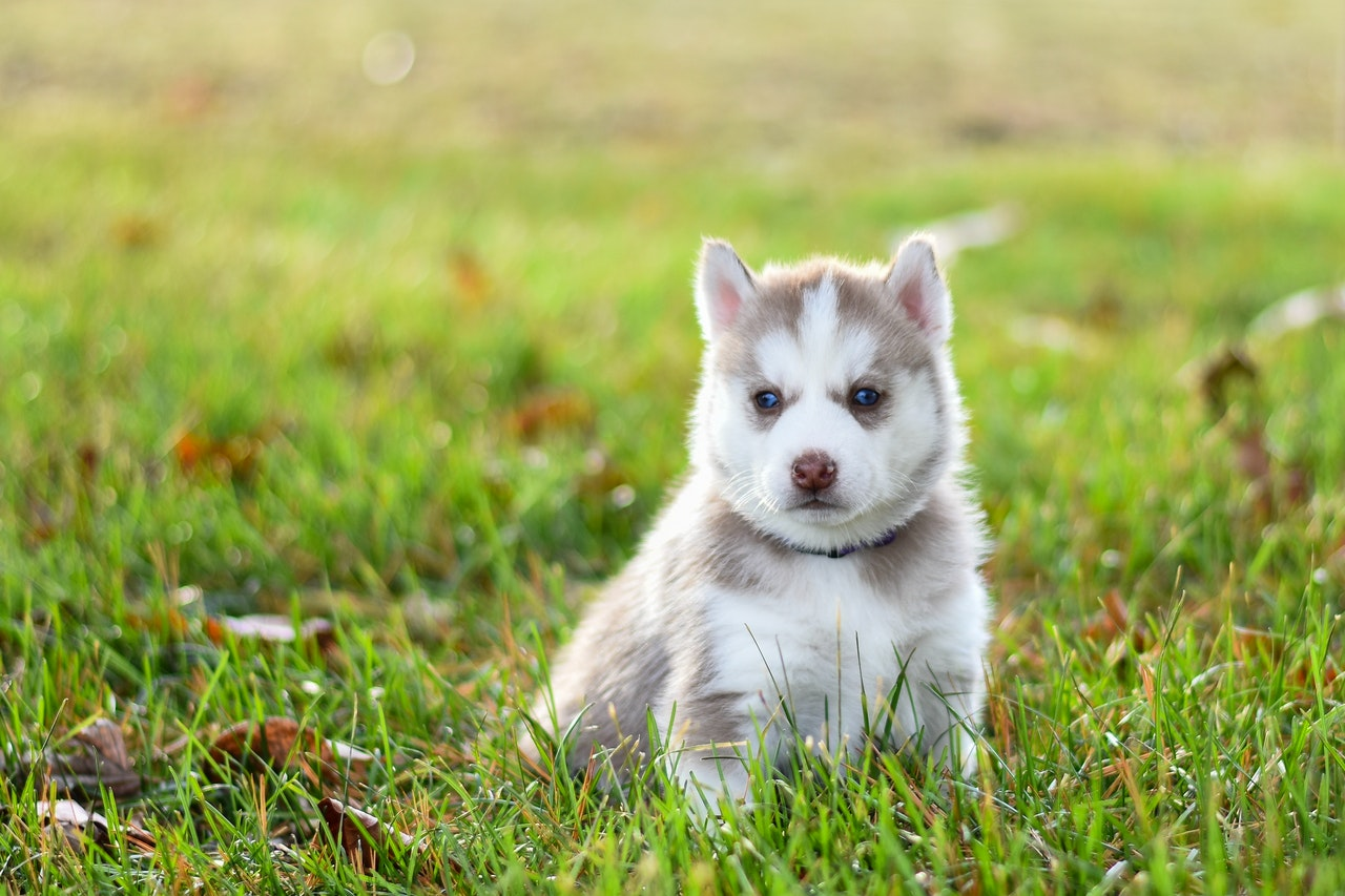 Best Dry Dog Food for Puppies