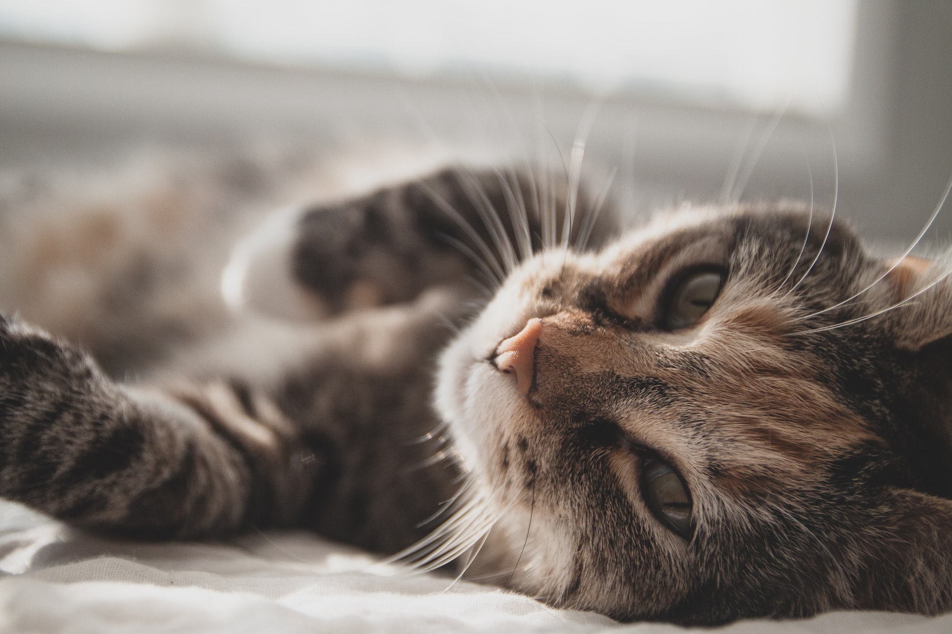 Kidney Problems In Cats